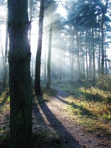 pine-light-161229-360x480